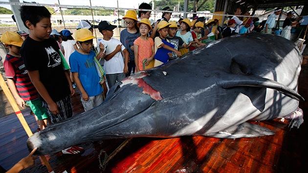 Fotos: Invitan a niños japoneses a ver cómo una ballena recién cazada es troceada