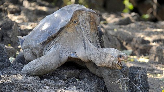 Muere Solitario George, el símbolo centenario de las Islas Galápagos