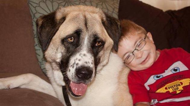 """Video: El """"amor en estado puro"""" entre un niño discapacitado y un perro de tres patas"""