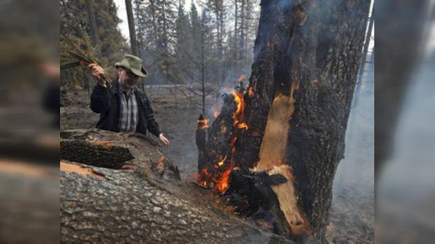 Crece el número de incendios forestales en diferentes partes de Rusia