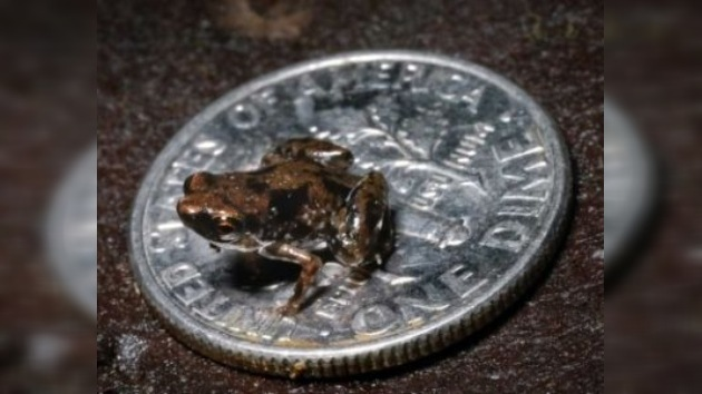 Descubierto el vertebrado más pequeño conocido