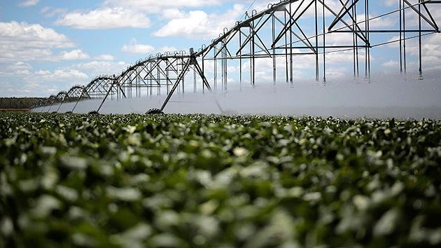 Agricultores brasileños a Monsanto: Devuélvenos nuestro dinero