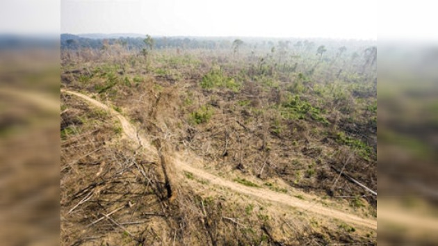 Grave aumento de la deforestación de la selva amazónica de Brasil
