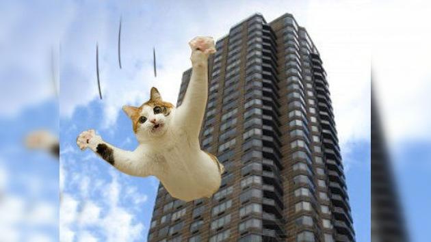19 pisos de caída libre, no es nada para un gatito de Boston