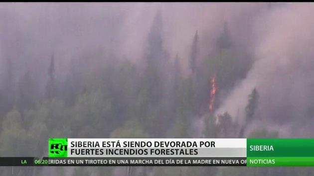 Arden más de 10.000 hectáreas de bosque en Siberia