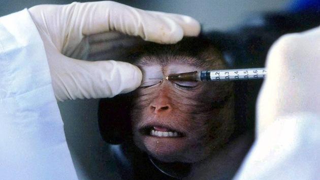 Granjas de 'humanos artificiales' ayudarán a poner fin a experimentos con animales