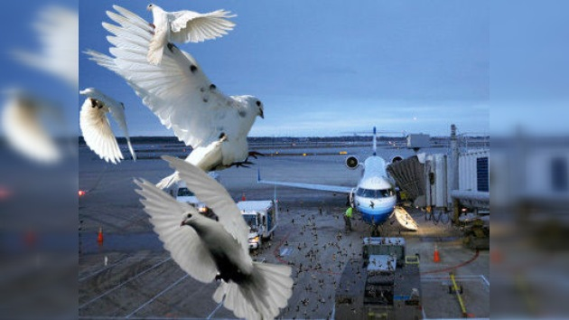 Arrestado un empresario de EE. UU. por alimentar a palomas