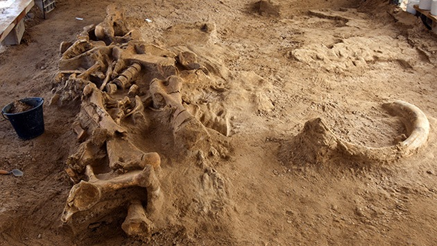 Hallan en Francia el esqueleto de un mamut