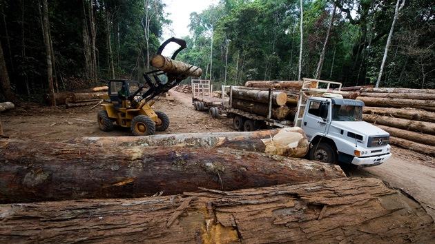 El crimen organizado es responsable del 90% de la deforestación tropical