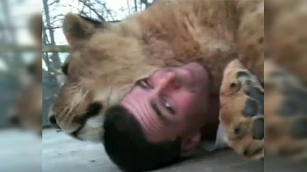 Una cariñosa leona conquista a los encargados de un refugio felino