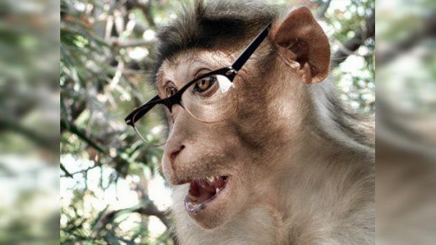 Mono ladrón en la India