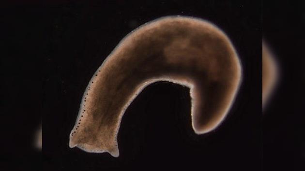 El gusano, símbolo de muerte... ¿o de inmortalidad?