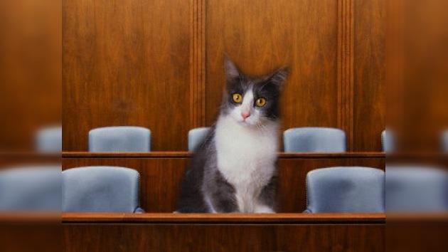 Un gato tendrá que formar parte de un jurado en EE. UU.