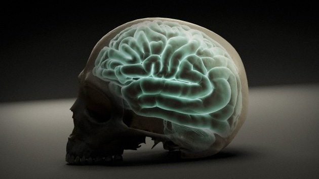 O cérebro é um 'quebra-cabeça': descobrir quais peças são desenvolvidas separadamente