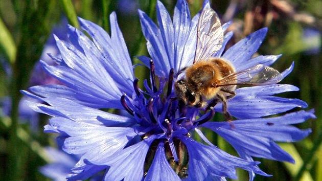Demandan a la Agencia Ambiental de EE.UU. por provocar el 'holocausto de abejas'