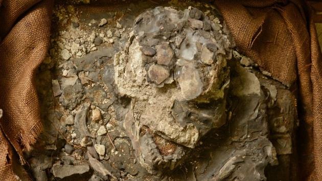 Hallan un esqueleto humano de 6.500 años en el sótano de un museo de EE.UU.