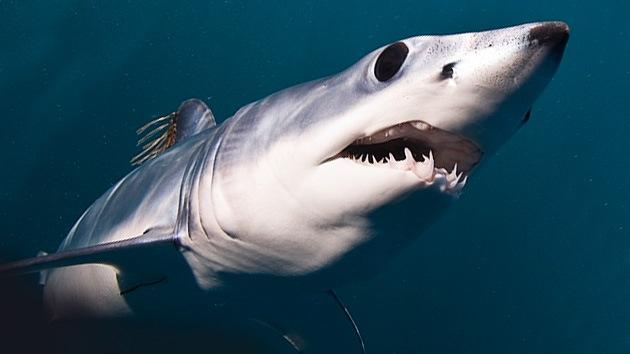Un buzo retrata cara a cara al tiburón más aterrador del océano