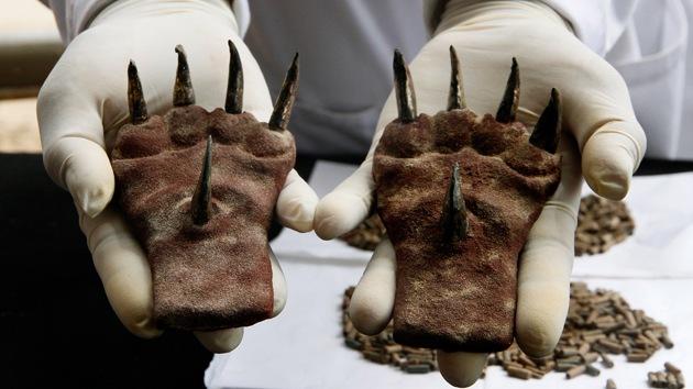 Arqueólogos peruanos hallan extraño atuendo felino en una tumba de hace 1.500 años