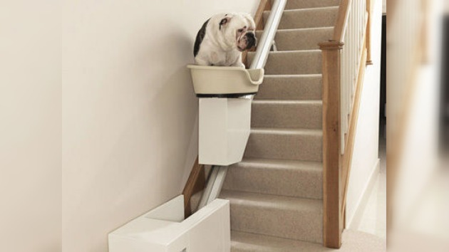 Crean el primer ascensor para perros obesos