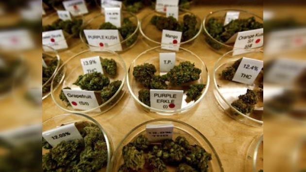 El Gobierno de Jamaica evalúa la despenalización de la marihuana