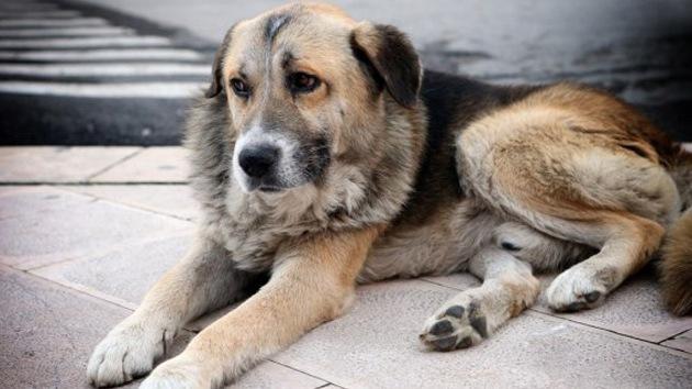 Conozca las conmovedoras historias de los perros más fieles del mundo