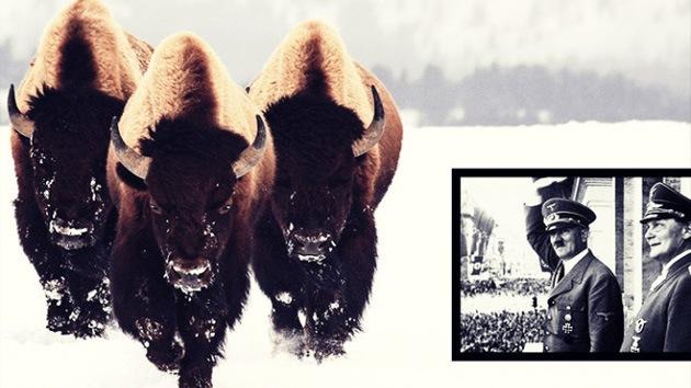 Adolf Hitler planeaba revivir bisontes de hace 9.000 años