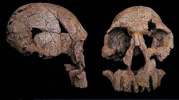Descubren una nueva especie de homínidos que poblaban África hace 2 millones de años