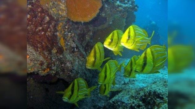 Niños de todo el mundo, unidos para salvar la fauna marina de Cabo Pulmo