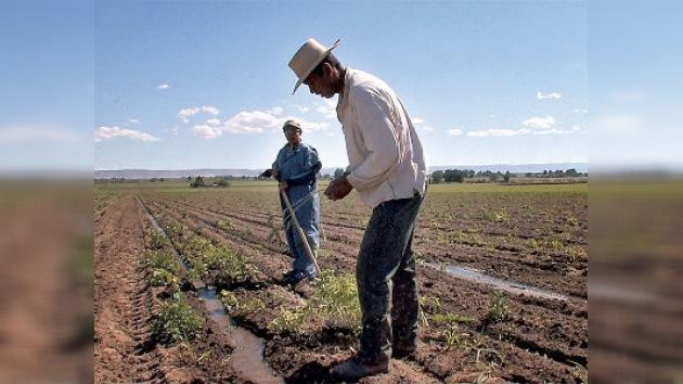 Gobierno de EE.UU. discrimina a granjeros hispanos