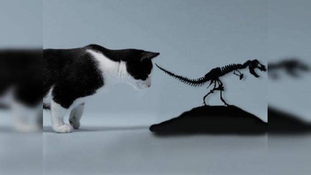 Los primeros dinosaurios eran del tamaño de un gato