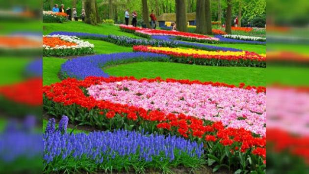Millones de flores dedicadas a Rusia
