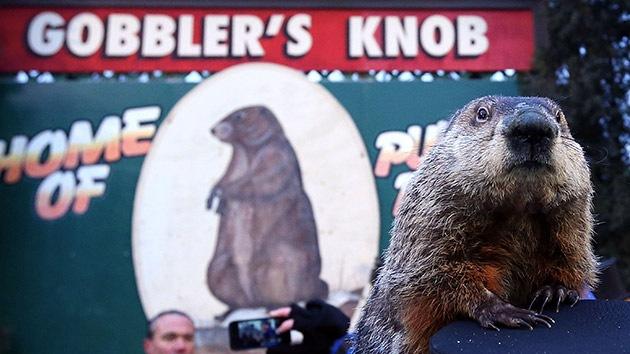 Solicitan la pena de muerte para la famosa 'marmota meteoróloga' Phil