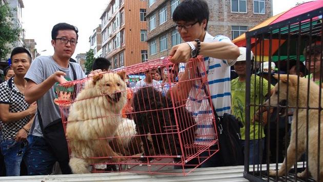 Impactante video sobre el polémico consumo de carne de perro en China