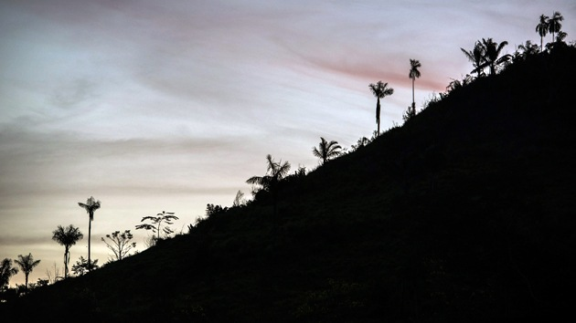Informe rejuvenecedor: la selva amazónica puede tener menos años de lo estimado