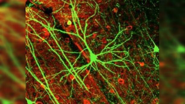 La solución a la esquizofrenia, a flor de piel