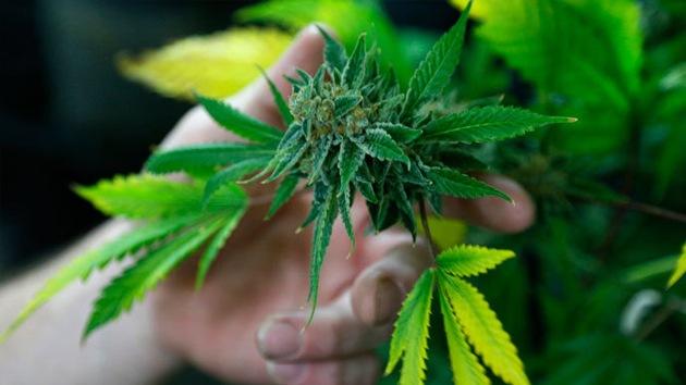 La marihuana entra en la campaña de cara a las presidenciales de 2016 en EE.UU.