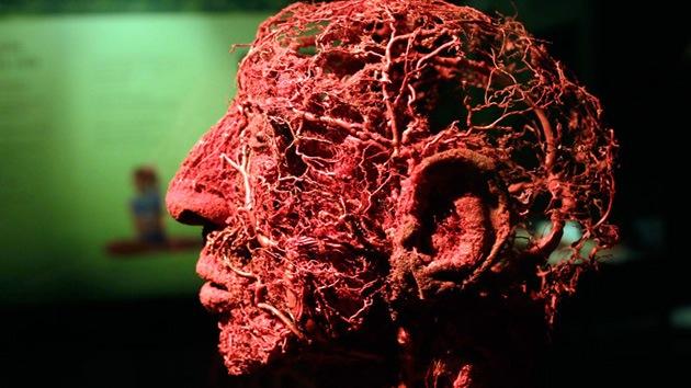 Crean un plástico 'autocurativo' que imita la coagulación de la sangre en humanos