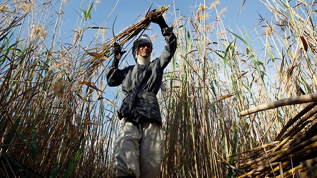 El Estado Islámico, a la caza del trigo iraquí