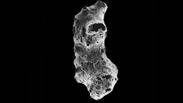 Esponjas marinas, primeros seres vivos de la Tierra