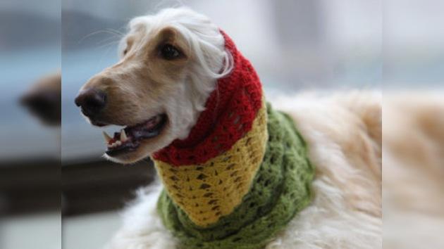 Un perro muere ahogado por un abrigo en un desfile de moda canina en Madrid