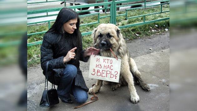 En Rusia se realiza acto en apoyo a los animales callejeros