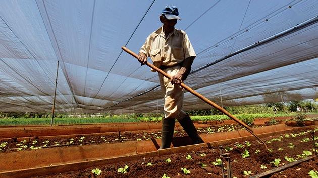 Cuba gana crédito: la inyección de préstamos en el sector privado reanima la economía