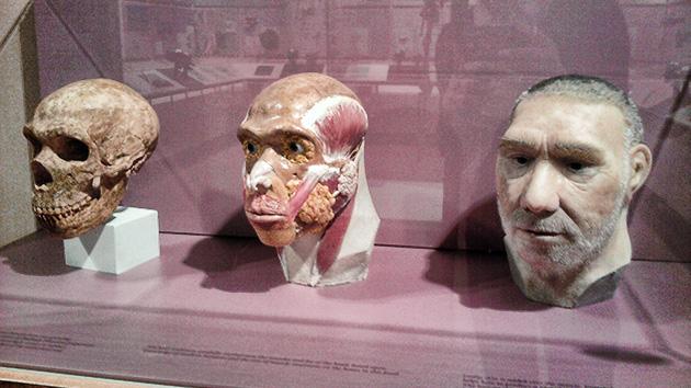 Los científicos rompen el mito: el neandertal no tuvo sexo con humanos