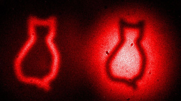 Científicos logran captar la imagen del gato de Schrödinger