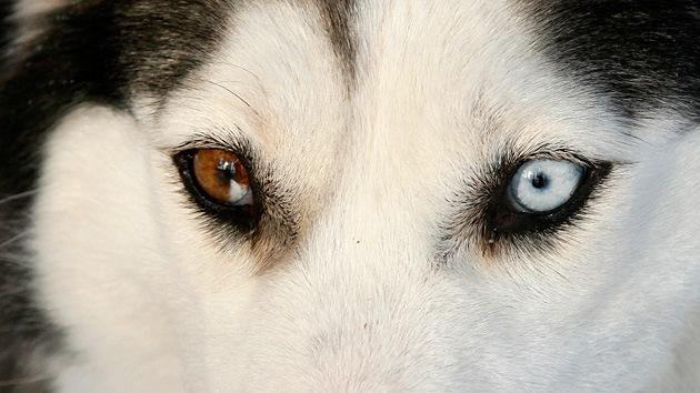 Imágenes que demuestran que no hay nadie más fiel que un perro