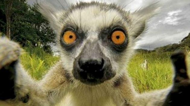 Los animales también se sacan 'selfies'