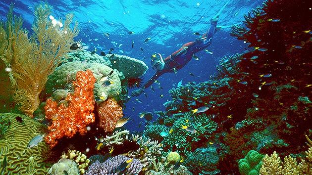 Australia: permiten un enorme vertido de barro en la Gran Barrera de Coral