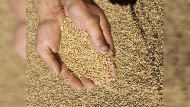 Rusia enviará 100 mil toneladas de trigo a Cuba