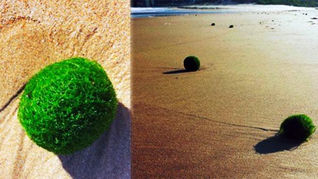 FOTOS: 'Huevos alienígenas' verdes invaden una playa australiana