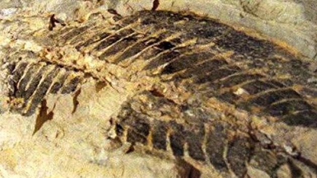 Australia: Obreros hallan fósiles de reptiles, peces y conchas de 50 millones de años